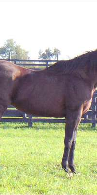 Ogygian, American Thoroughbred racehorse, dies at age 31