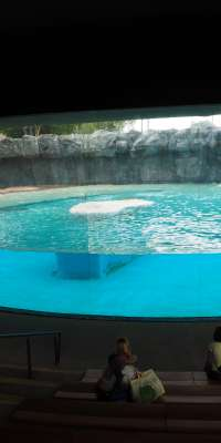 Inuka, Singaporean polar bear, dies at age 27
